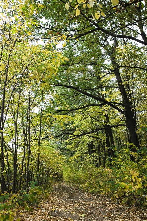 És az erdő sem ért még véget