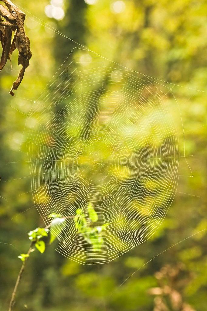 Elhagyott pókhálókkal...