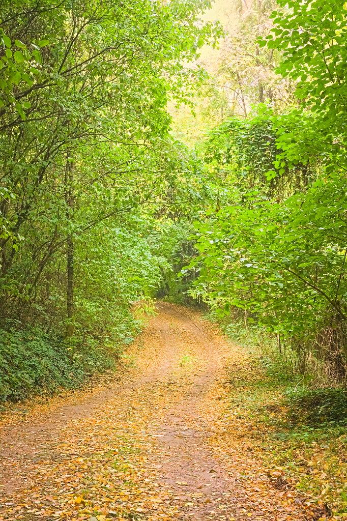De végre volt igazi ősz is... Sárguló fákkal, avarral...
