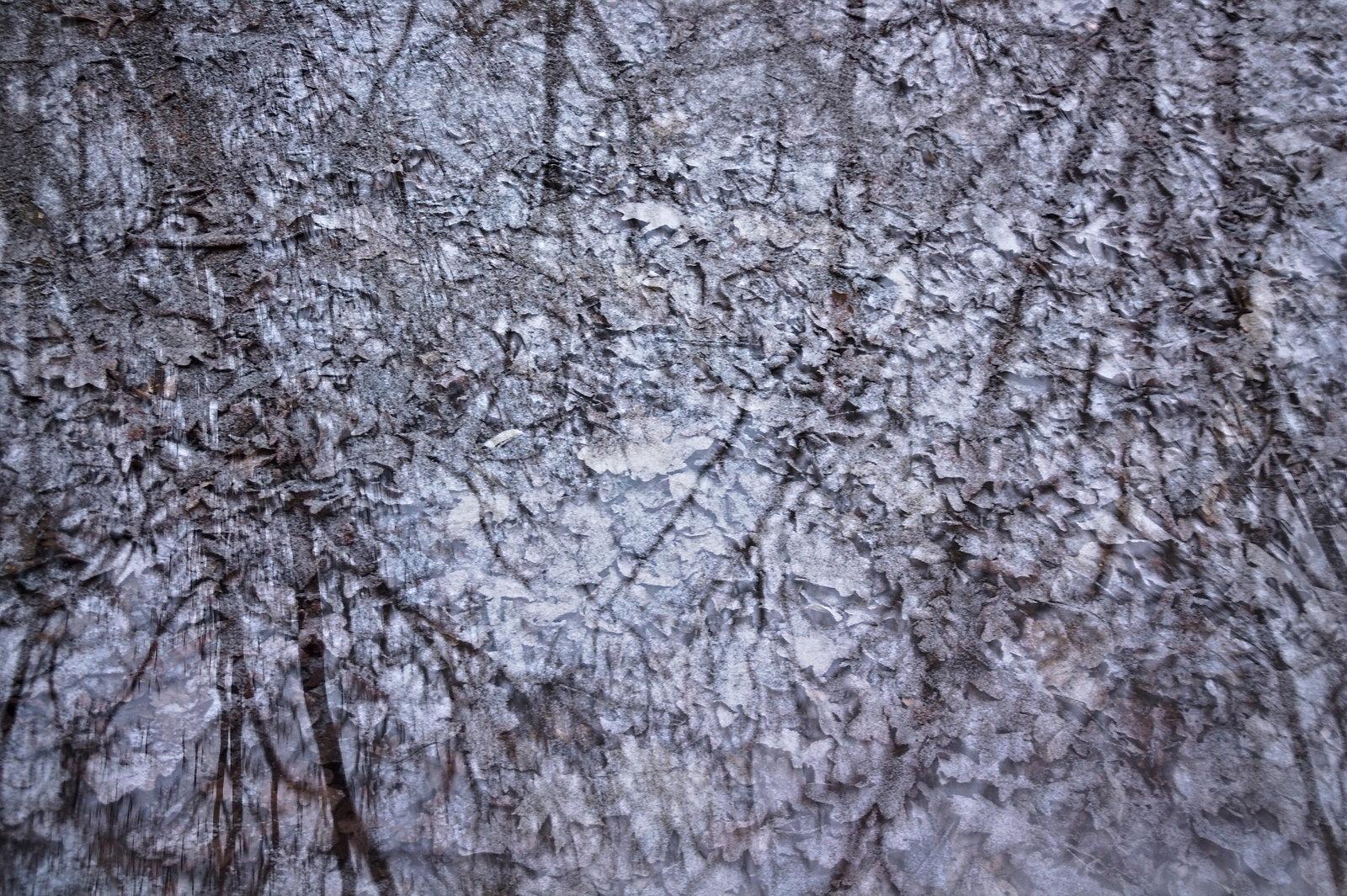 Másik fajta tükör, fák és lehullott leveleik