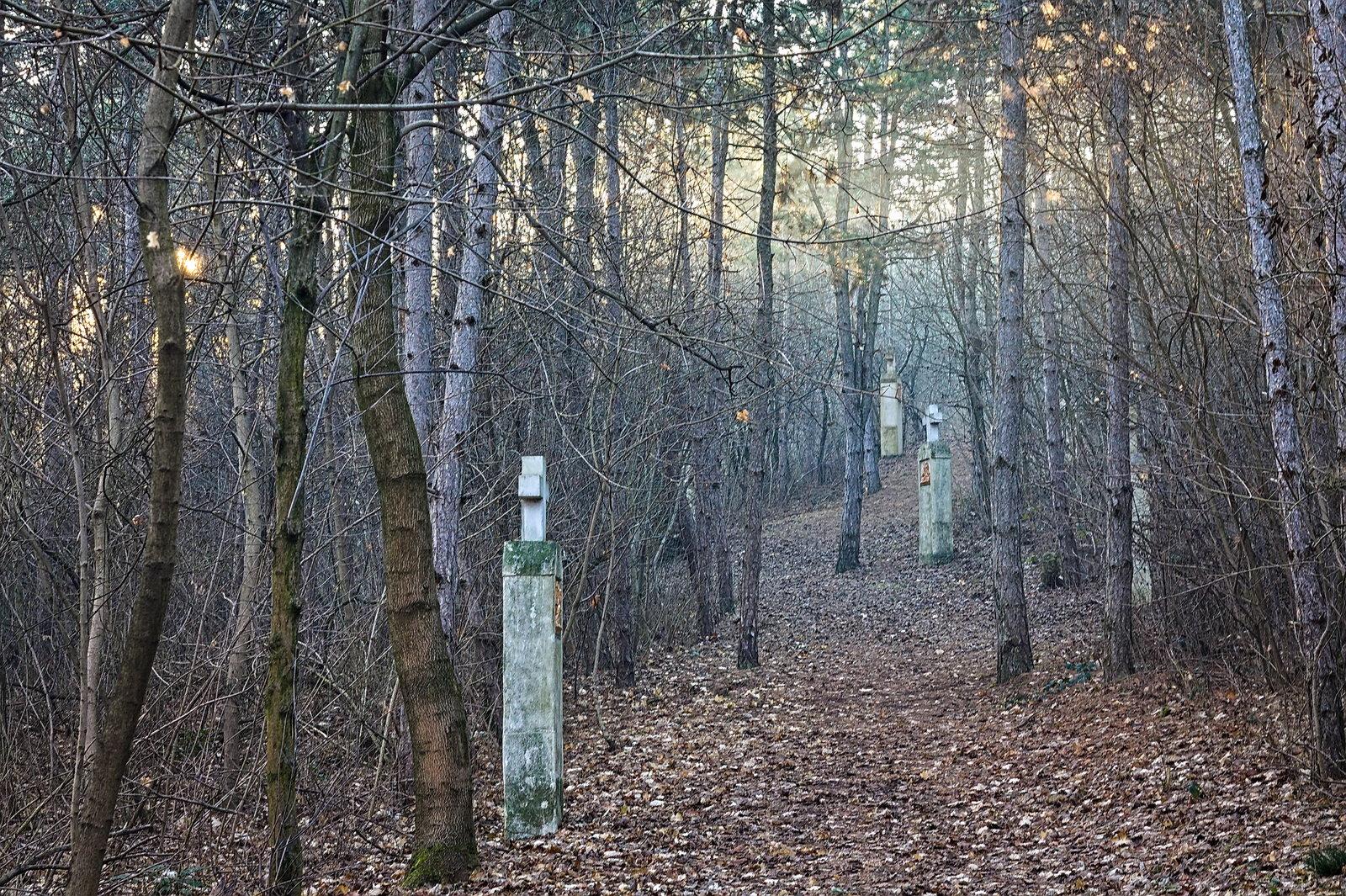 Mire hazaindultam, már az erdőben is terült a fény