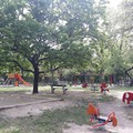 Mi lesz veled Haller park?