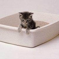 A macskaürülék szárnyakat ad az emberi vállalkozószellemnek