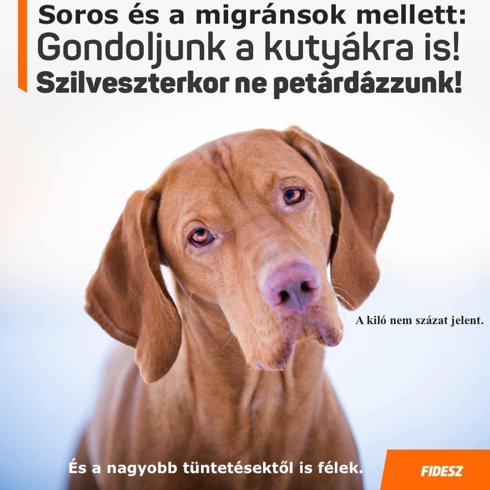 fidesz_vizsla_petarda.jpg