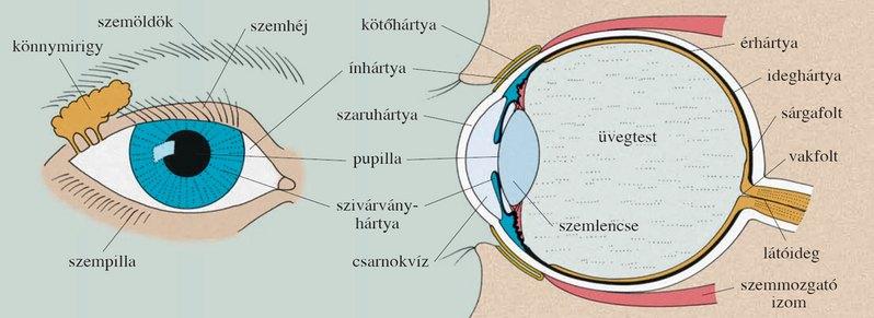 Az egyik szemre kezdett hullani a látás Látásélesség 0 03 mi ez