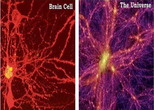 brain_universe513.jpg