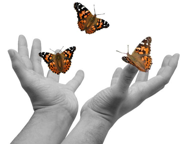 hands-releasing-butterflies.jpg