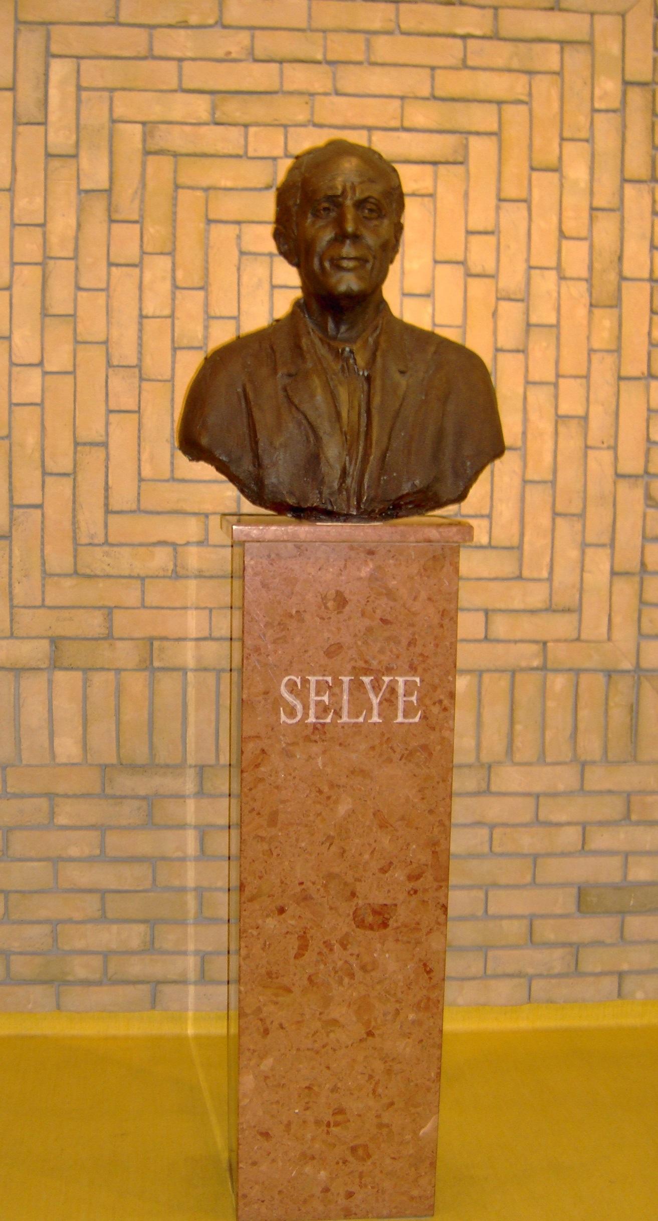 selye-university.JPG
