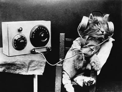 pet_radio.jpg