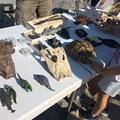 Dinoszaurusz-kutatás a Bakonyban: Dino Expo 2019