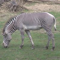 Sóstó Zoo - Nyíregyházi Állatpark