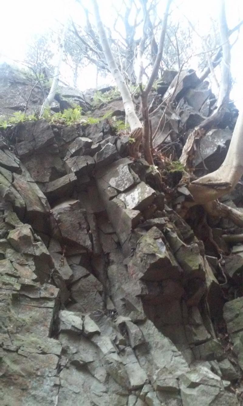 A bazalttöredéken megkapaszkodó fa