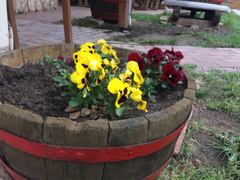 Virágokkal tarkított udvar