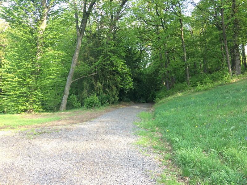 Erdei ösvény a parkban