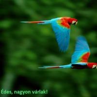 A hullámos papagáj - KIVÁLASZTÁS, ELHELYEZÉS, GONDOZÁS, HELYES.