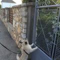 Pesti kutya vidéken