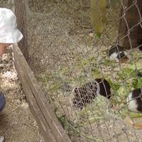 Ismét állatkert