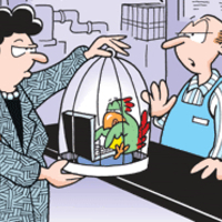 A papagáj szabad akarna lenni?