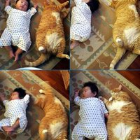A macskák