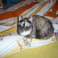 Kokó cica és a szoptatóspárna
