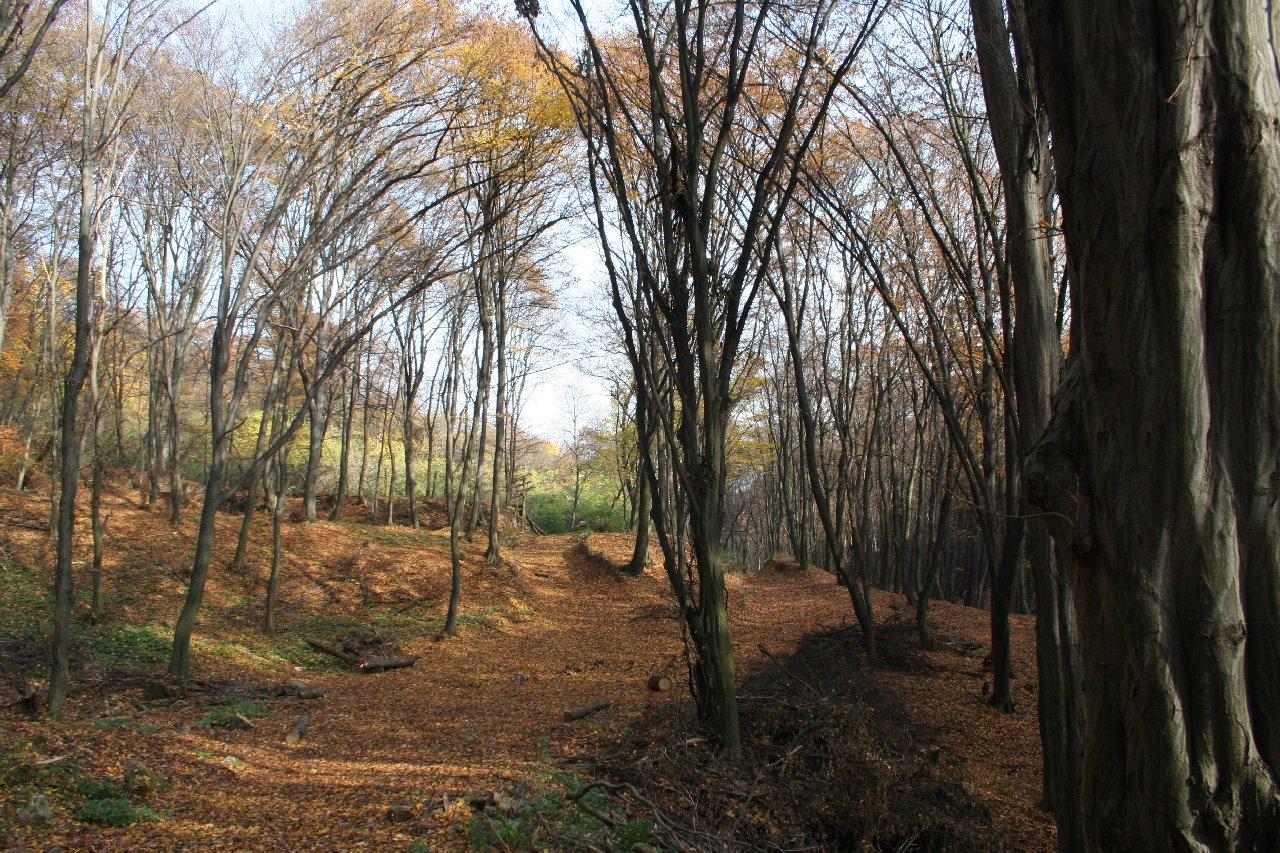 Áprily Lajos – Völgy túra (outdoor)