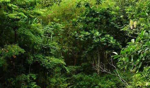 """Képtalálat a következőre: """"dzsungel"""""""