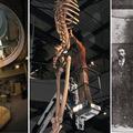 Több ezer óriás koponyáját és csontjait semmisítették meg?