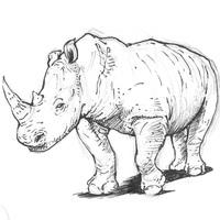 Rinocerosz fejlődése