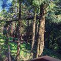 Vas megyei kitérő - A Jeli Arborétum és Szombathely  #belföld