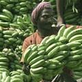 Eltűnhet a banán a polcokról