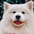 Az Instagram öt legnagyobb kutyasztárja