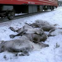 Vérfürdőt rendeztek a vonatok