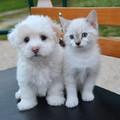 Macskák, kutyák és a szuperbaktériumok
