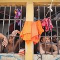 Miért van annyi vérengzés a brazil börtönökben?