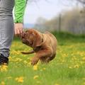 Nevelhetetlen a kutyád? A személyiségeddel van gond