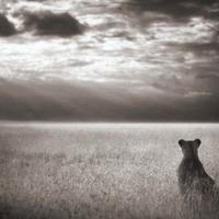 Mesés képek Afrikáról