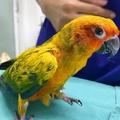 A papagáj, ami 21 gyémántot reggelizett