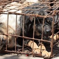 Kutyavilág: döbbenetes bánásmód