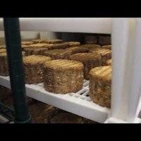 Így készül az emberi sajt