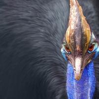 Az óriás gyilkos madár visszatér