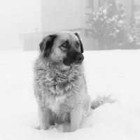 Megható képek Szarajevó kóbor állatairól