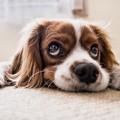 A kutyaugatást is büntetnék