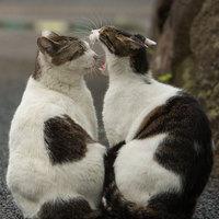 Nagyvárosi kóbor macskák