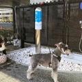A kutyakényeztető reptér