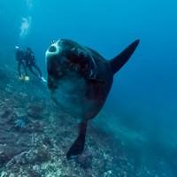 Káprázatos képek az óceánokról