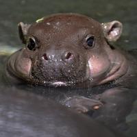 Hűsölő állatkölykök - melengető képek az őszies hidegben