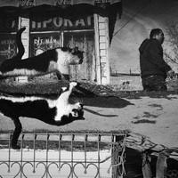 A kóbor macskák titokzatos világa