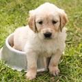 Bizarr megoldások a kutyák szájszagára
