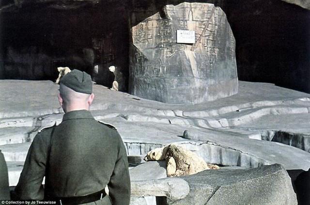 katonák az állatkertben.jpg