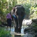 Dr. Chan és az elefántok